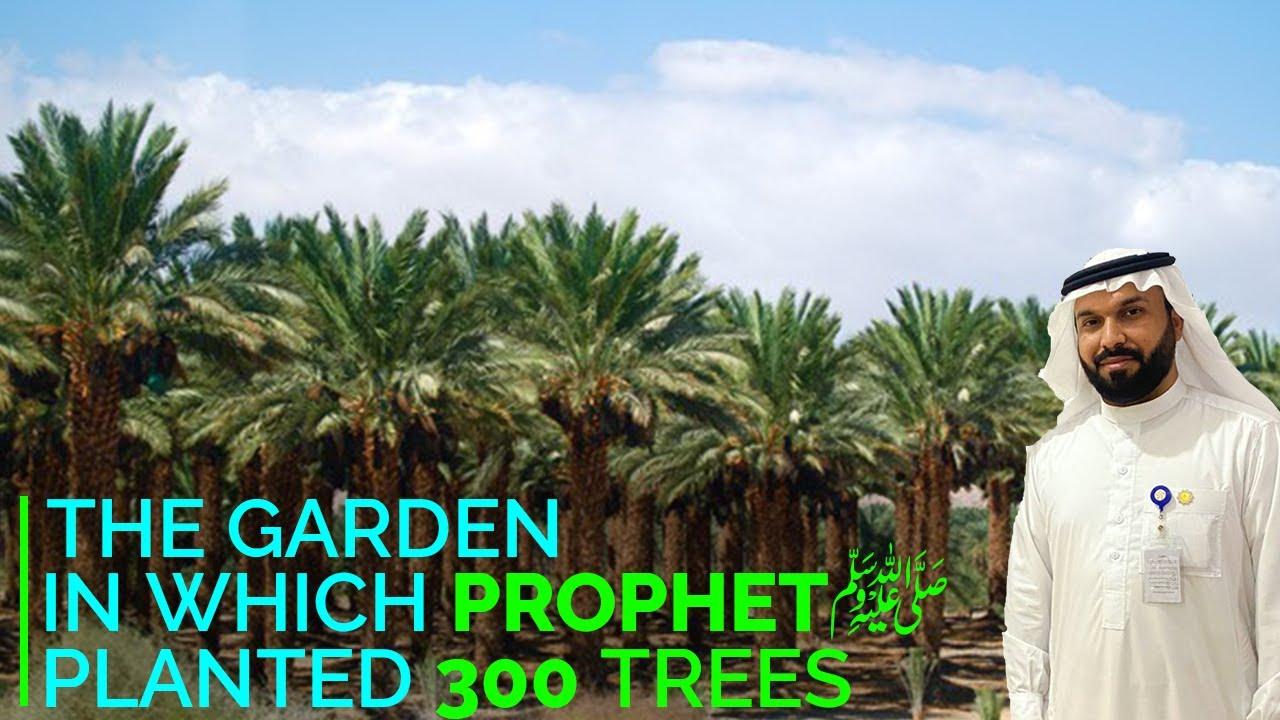 Madina The Garden Of Salman Farsi R A, jahan Nabi S A W Ne 300 Khajoor K darkhat Lagaye