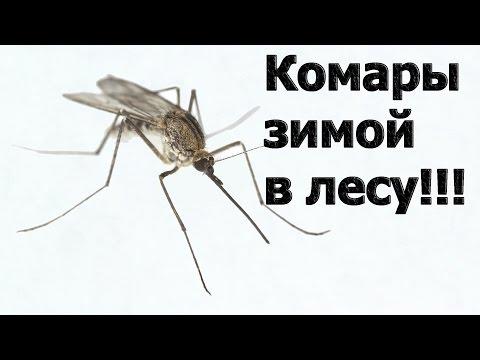 Вопрос: Каких насекомых можно встретить зимой в лесу?