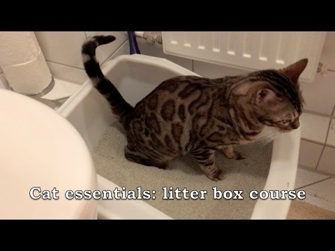 Cat essentials: Litter box course