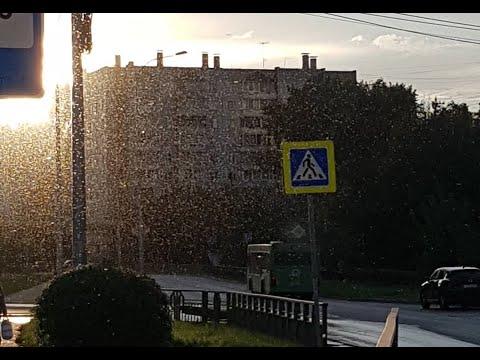 Красноярск атаковали полчища насекомых. 13-14 сентября 2020 года