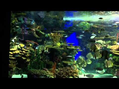 Ep. 36 - Ripley's Aquarium