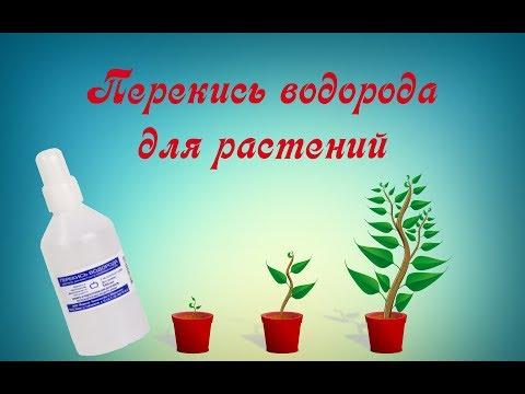 Перекись водорода или чудо-средство для растений