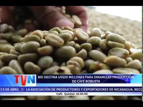 BID DESTINA US$20 MILLONES PARA DINAMIZAR PRODUCCIÓN DE CAFÉ ROBUSTA