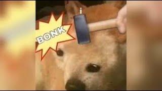 THE CUTE DOG GOT BONKED Animal Fails Compilation #1