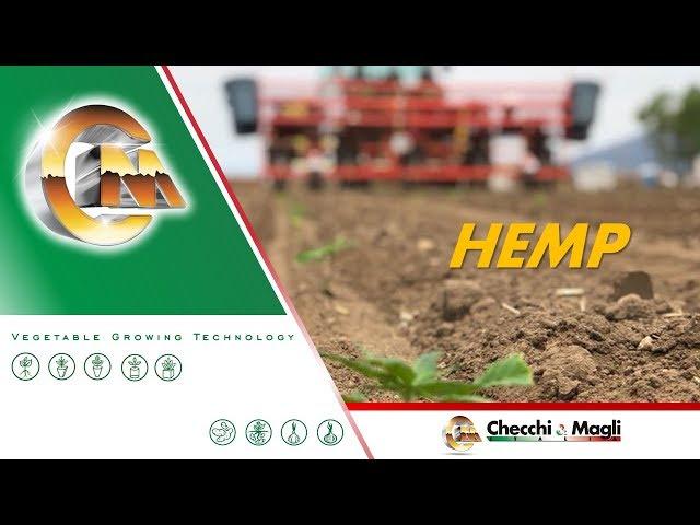 CHECCHI & MAGLI - HEMP