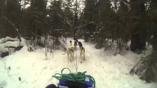 Making Tracks Dogsled Adventure Trek Benefiting Victim Services Toronto