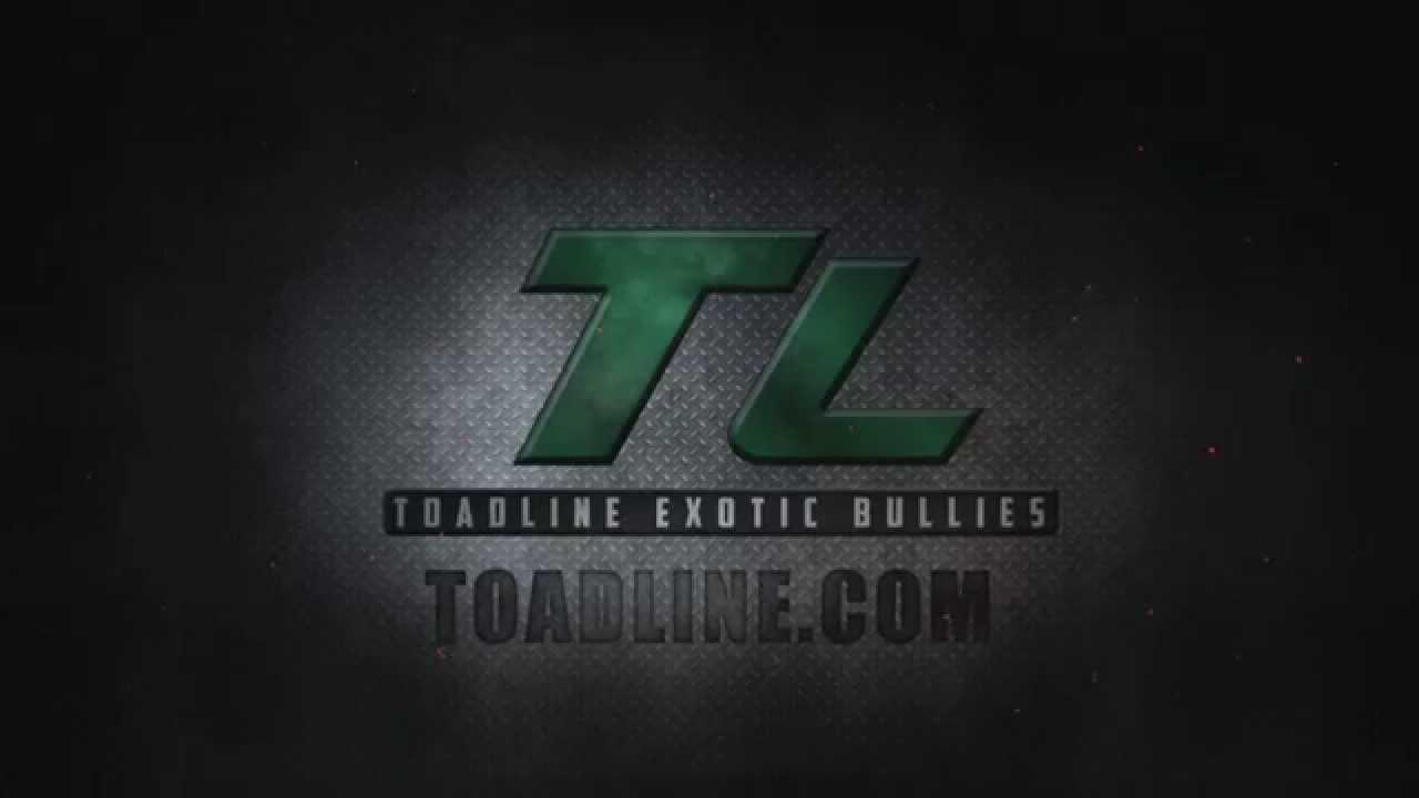 TOADLINE EXOTIC BULLIES - Official Toadline Site, GOTTIILINE