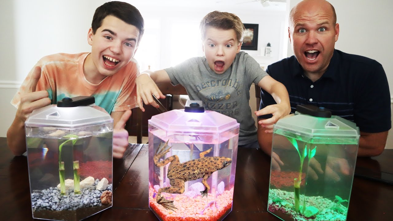 We Got New Pet Frogs!! They Are So Cool!