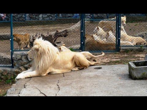 Belgrade Zoo - Zooloski vrt Beograd