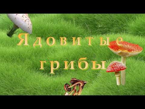 Ядовитые грибы - описание, фотографии