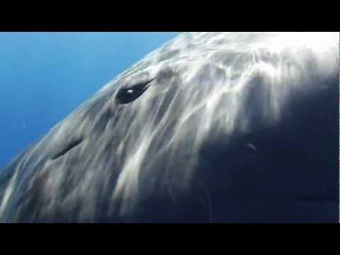 Sperm Whale Greeting