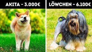 20 entzückende Hunde, die ein Vermögen kosten