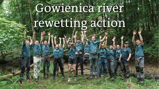 Rewilding Oder Delta: Gowienica rewetting action