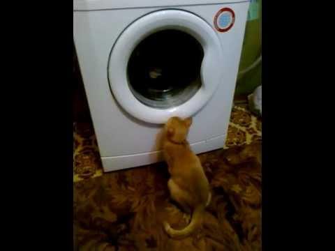 Вопрос: Для чего кошке дополнительное веко?