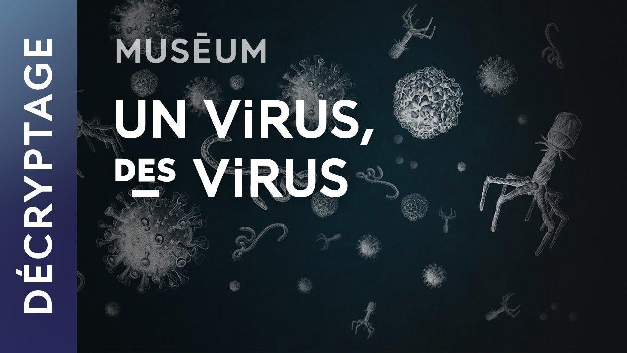 Download Qu'est-ce qu'un virus ?   Web-série Virus