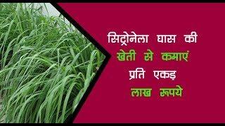 सिट्रोनेला घास की खेती से कमाएं प्रति एकड़ लाख रूपये... // Growing Citronella Grass // Krishi Jagran