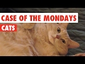 Case of the Mondays Cats Funny Pet Video Compilation 2017
