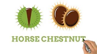 Horse Chestnut The Benefits
