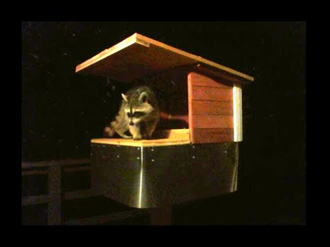 Raccoon Possum Proof Cat Feeder - How to Build - Funny Raccoons trying to  steal Cat Food