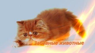Забавные смешные прикольные животные Кошки,собаки,Позитив,Для детей Создай себе хорошее настроение