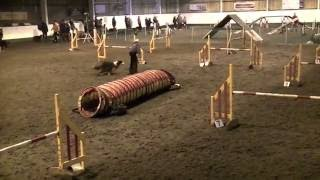 Rix Scandal and Tia at Hare n Hounds agility