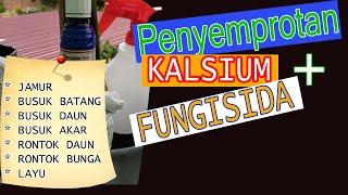 Mengatasi Jamur Busuk Batang, Rontok Bunga dan Layu dengan Fungisida