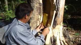 Дикий мёд из Башкортостана (Бортевой мёд) Wild honey