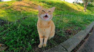 顔を見ると元気良く挨拶してくる野良猫がカワイイ
