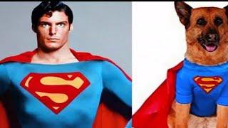 Супер герои как собаки в реальной жизни