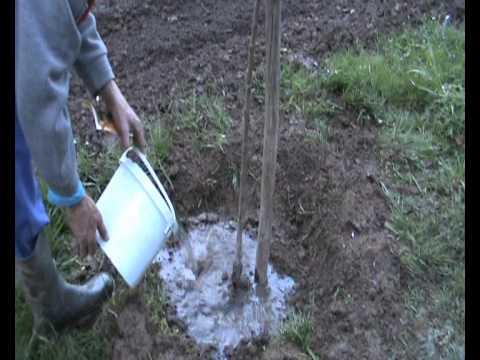 En la huerta plantar rboles frutales el cerezo rojo plant fruit trees red cherry youtube - Cuando plantar frutales ...