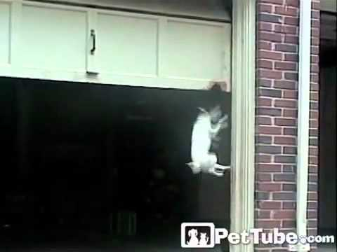 Attirant The Worldu0027s Biggest Dog Door  PetTube   YouTube