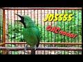 Jossss Pancing Cucak Ijo Lain Biar Emosi Cucak Ijo Full Isian Ngentrok  Mp3 - Mp4 Download