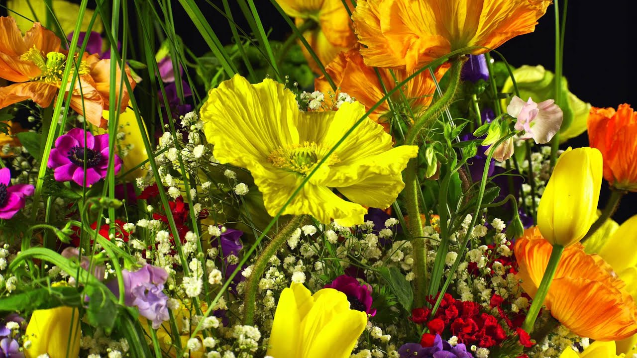Amazing 4k Flowers 3840x2160p Testfootage Demomaterial
