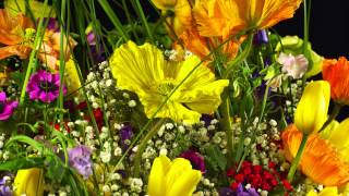 Repeat youtube video Amazing 4k flowers 3840x2160p (Testfootage, Demomaterial)