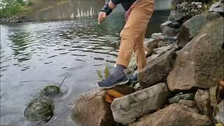 얼마나 메기가 많았으면 물고기 통발에 가득들어왔을까 ??