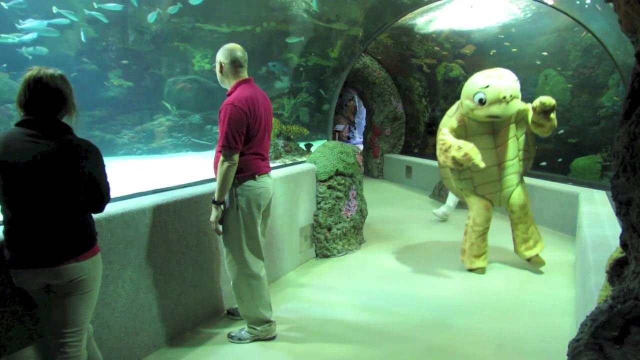 Virginia Aquarium Harlem Shake Youtube