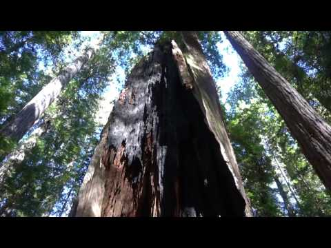 Stout Grove,  Jedediah Smith Redwoods State Park, Redwood National and State Parks system
