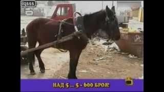 Урок по кражба на ток в Пловдив   Господари на ефира   Архив