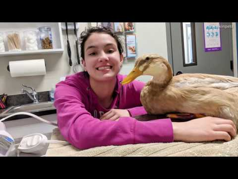 Teenager Gets Injured Duck a Wheelchair | Handicapped Pets Blog