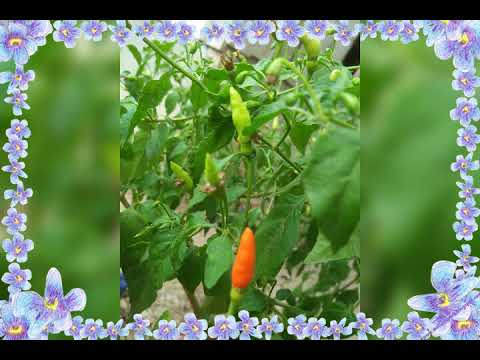 Koleksi Gambar Gambar Bunga Editing By Sari Yan Youtube
