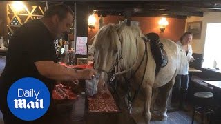 A horse walks into a bar... and enjoys bag of crisps at his local - Daily Mail