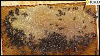 Similar Apps to Apiculture Suggestions