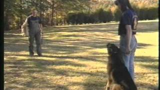 Harrison K9 Harrison Prather - Trained Personal Protection K9's