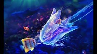 видео Разведение аквариумных рыбок как бизнес