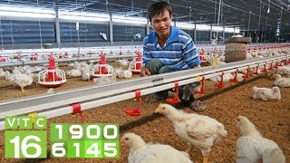 Sau lợn, nông dân điêu đứng vì giá gà giảm kỷ lục | VTC16