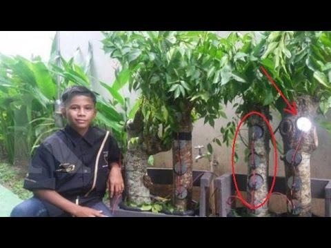 Hebat..ilmuan Jerman rela ke aceh demi naufal raziq  si penemu sumbert listrik dari pohon kedongdong