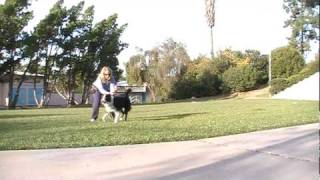 Go Wild & Freeze - A Fun Way To Train A Dog To Have Impulse Control