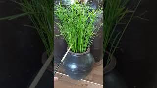 옹기(새우젓독, 조막단지, 약탕기)를 활용한 식물기르기…