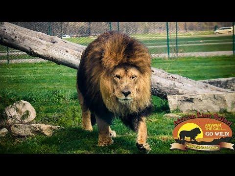 African Lion Safari - Ontario Canada