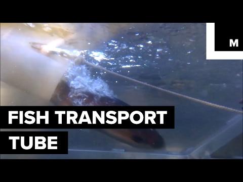 Fish transport tube